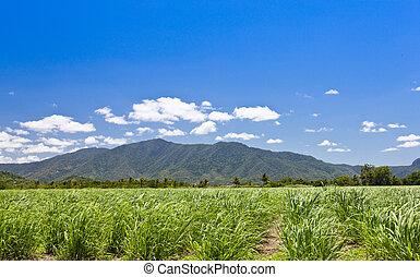 hegyek, zöld háttér, mező