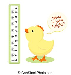 Height chart with cute baby chicken. Kids meter with cartoon bird. Inscription - What is your height? Meter wall or baby scale of growth. Vector EPS8