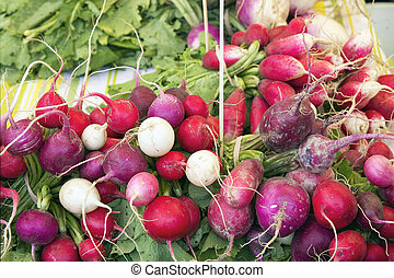 Heirloom Radish Bunches at Farmers Market