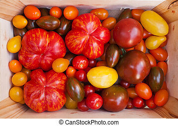 Various heirloom tomato cultivars from Organic horticulture.