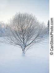 helado, árbol, en, invierno