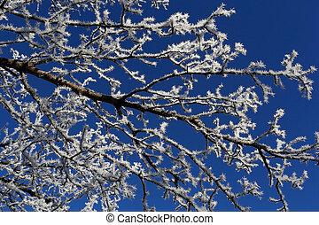 helado, rama de árbol