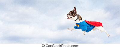 held, fliegendes, himmelsgewölbe, hund, durch, honigraum