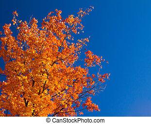 helder, sinaasappel, dalingsbladeren, op, blauwe hemel