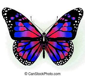 helder, vlinder, colo, vrijstaand