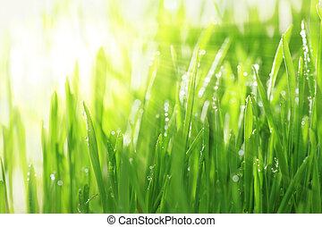 helder, zonnig, achtergrond, met, gras, en, water, droplets,...