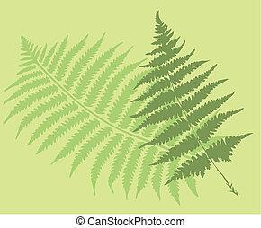 helecho, hojas