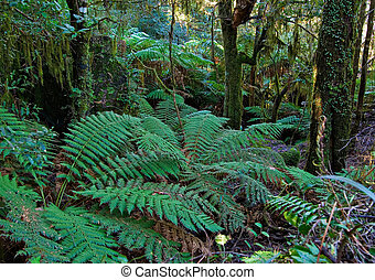 helechos, árbol, rainforest
