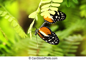 Heliconius melpomene Butterfly Over Green Background
