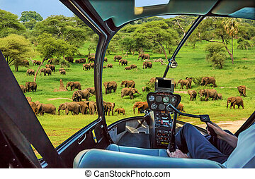 Helicopter on Tarangire National Park - African elephants in...