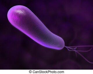 heliobacter