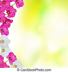 hell, bunte, delikat, orchidee, flowers., blumen-, hintergrund