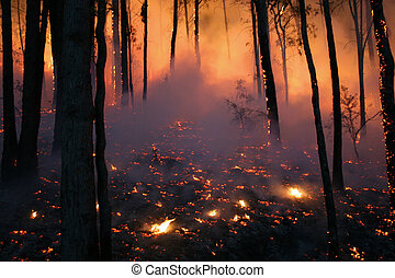 Hell - Bushfire/Wildfire closeup at night