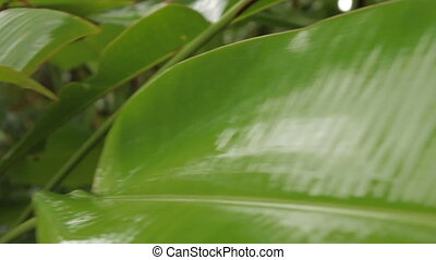 hell, grün, betriebe, unter, der, rain., tropischer wald, in, regnerisch, season.