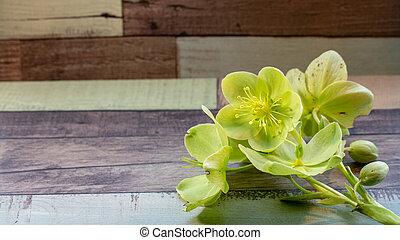 Hellenborus on wooden background