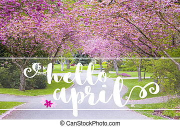 Hello April message on a quiet country road lined with spring flowering cherry blossoms.