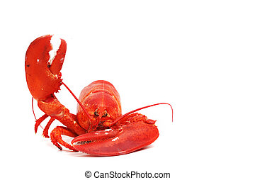 hello lobster isolated on white background