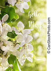 Hello May lettering card. Spring background with flowers.