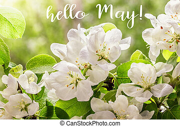 Hello May lettering card. Spring background with flowers