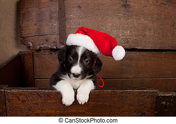 Hello puppy with christmas