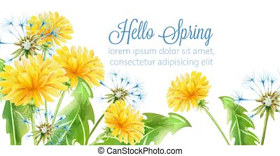 Hello spring banner with yellow dandelion flowers