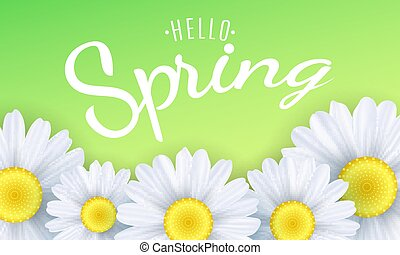 Hello spring phrase. Seasonal background. Camomiles flowers on a green background. Vector illustration