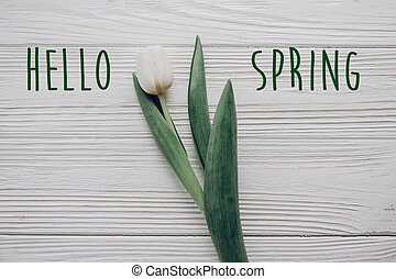 hello spring text fresh sign. stylish white tulip on rustic wooden table background top view. hello spring flat lay. soft light, tenderness atmospheric moment. minimalistic