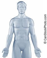 helyzet, ember, elszigetelt, anatómiai