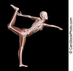 hembra, esqueleto, en, posición yoga