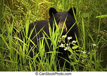 hembra negra, cachorro de oso