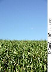 hemel, gras