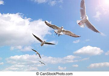 hemel, groep, vogels