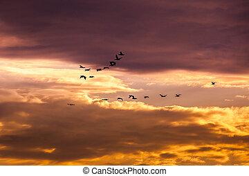 hemel het vliegen, groep, aalscholver