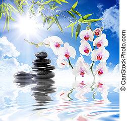 hemel, orchids, zon, bamboe, witte
