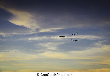 hemel, vogels