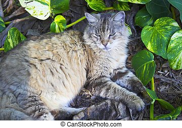 Hemingway cat - Gray cat resting surrounded by greenery at ...