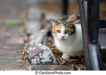 Hemingway Cat - One of the six-toed in the garden of the ...