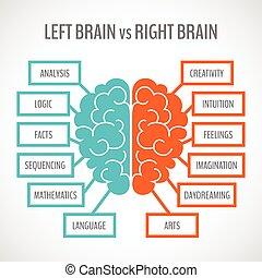 hemisfär, hjärna, infographics