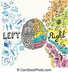 hemisférios, cérebro, esboço