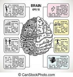hemisférios, cérebro, esboço, infographic