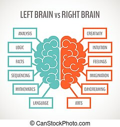 hemisférios, cérebro, infographics