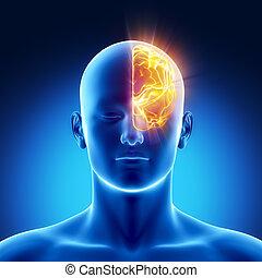 hemisferio, concepto, izquierda