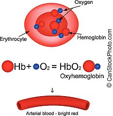 hemoglobin, oxygen., transporter, illustration, infographics...