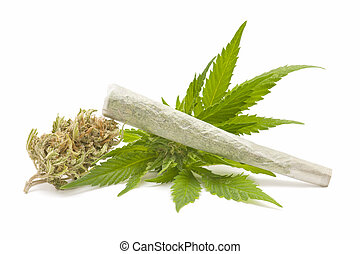 Hemp (cannabis) - marijuana cigarette and green Leaf ...