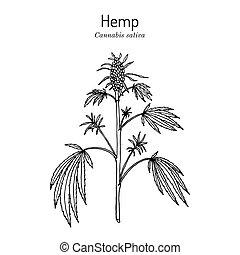 Hemp, Cannabis sativa, medicinal plant. Hand drawn botanical vector illustration