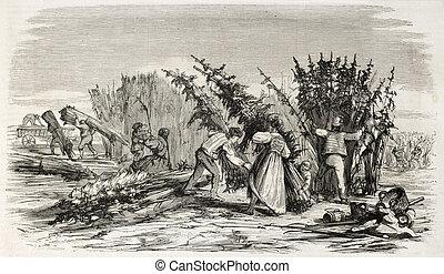 Hemp harvesting on Rhine bank. Created by Lallemand, ...