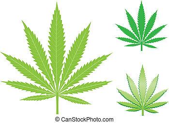 hemp leaf - green hemp, cannabis leaf isolated on the white...