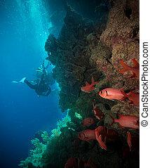hemprichi), silueta, arrecife, vibrante, coral, (...
