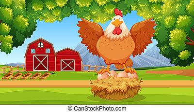 Hen at the farmland