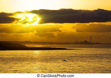 hen, atlantisk, solopgang, havet